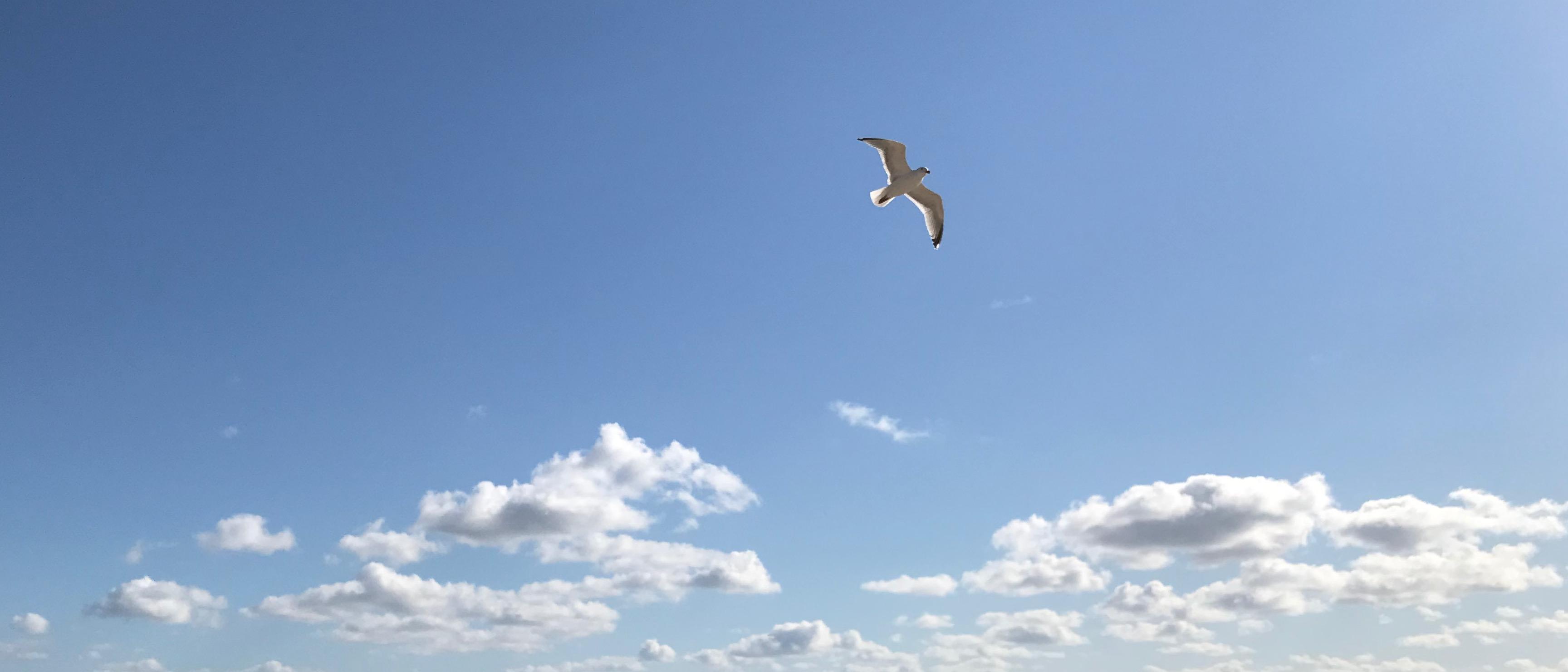 Eine Möwe gleitend im Wind im Gegenlicht am blauen Himmel.