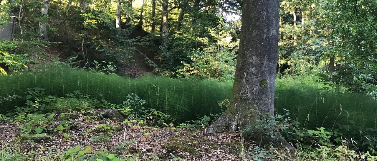 Blick in einen natürlich gewachsenen Laubbaumwald am Förde-Hang
