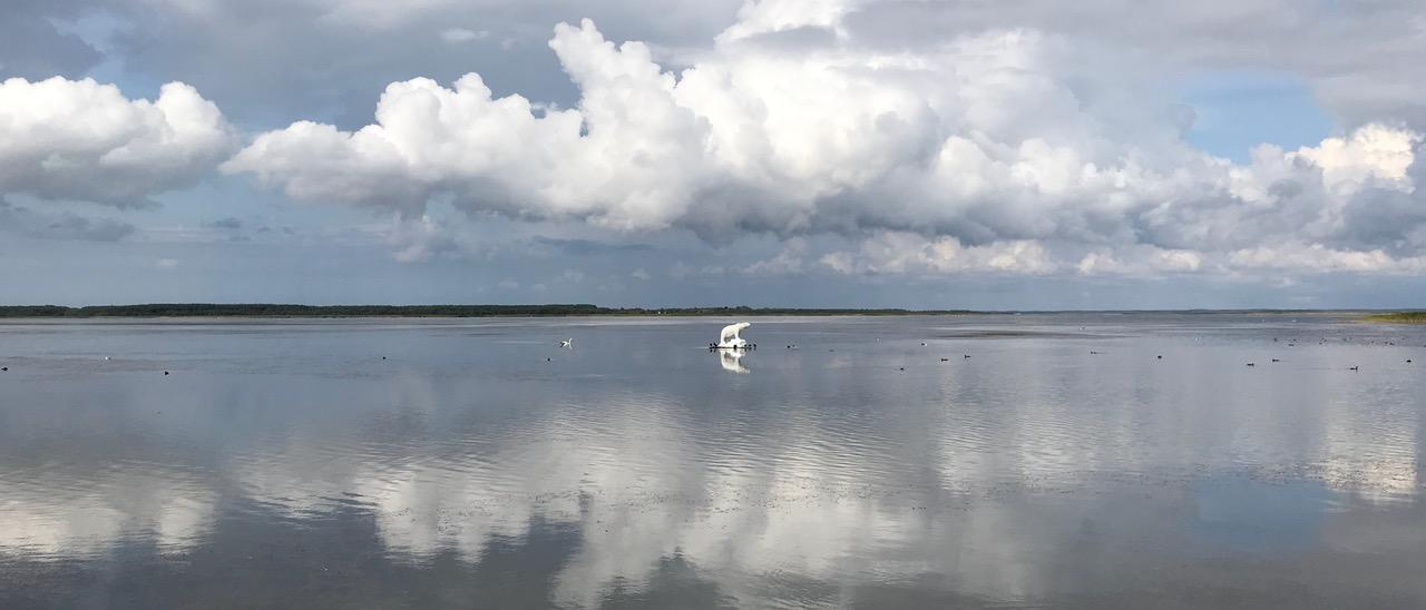 Ein einsamer Eisbär auf einer Scholle im See